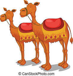 Camels - Illustration of camels