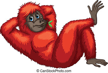 Orangutan - Illustration of an orangutan