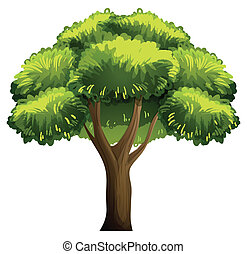 Oak tree - Illustration of a single oak tree