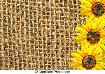 Sackcloth  - Three sunflowers on the sackcloth background.