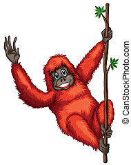 Orangutan - Illustration of a orangutan hanging from a vine