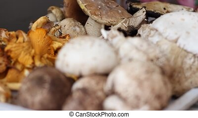 Comestible Wild Forest Mushrooms - Changing focus to a pile...