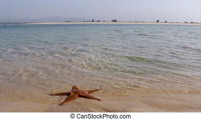Ria Formosa Armona Island Starfish - Ria Formosa View from...