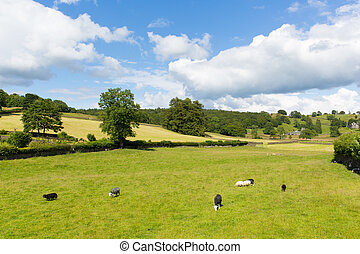 Near Sawrey village country view - Near Sawrey country view...