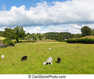 Near Sawrey country view Hawkshead - Near Sawrey country...