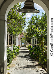 citrus garden - beautiful mediterranea garden with citrus...