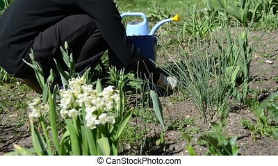 gardener weed flower bed - closeup gardener weeding flower...