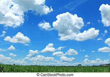Field on background of the blue sky