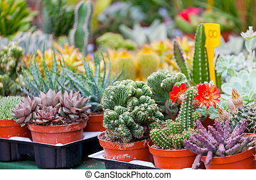 Various cactuses on a show-window of flower shop