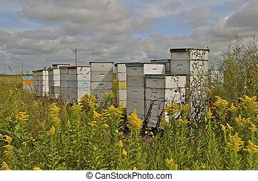 Bee hives in the field