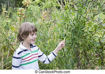 Child picking green peas outside