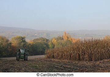 tracteur, champs, automne - tracteur, champs, travail,...