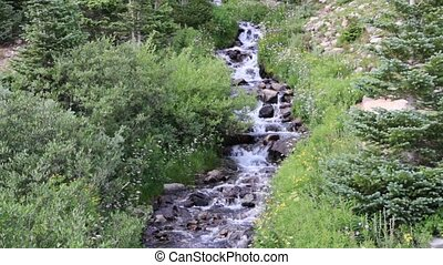Cascading Mountain Stream - Near treeline along the Rollins...