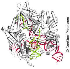 CRISPR-CAS9 gene editing complex from Streptococcus...