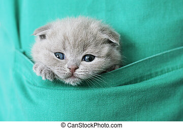 kitty in pocket  - Small kitty in pocket of the apron