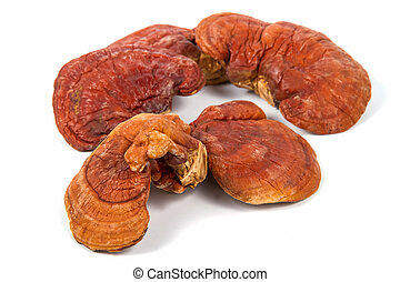 Lingzhi Mushroom Ganoderma Lucidum Isolated on white...