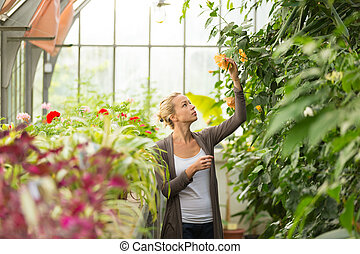 Florists woman working in greenhouse - Florists woman...