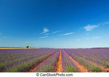 Old ruin in Lavender fields
