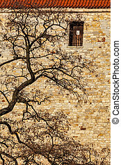 Tree in city - tree branches agains old brick wall
