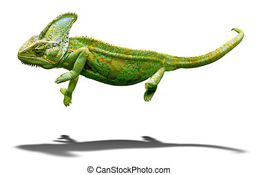 coloridos, camaleão, closeup, isolado, branca, sombra