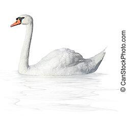Bird swan  on a white background
