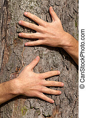 Hands on tree - A close up of hands sticked to a tree trunk