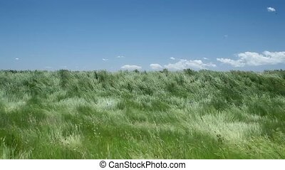 Beautiful waving grass of wilderness, South Dakota