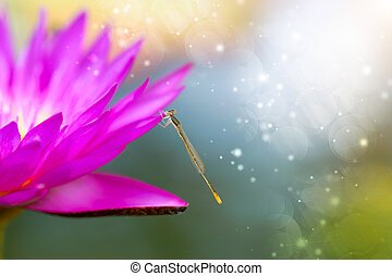 Dragonfly and pink waterlily hybrid flower
