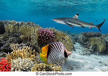 Colorful underwater coral reef with yellow stripped fish and...