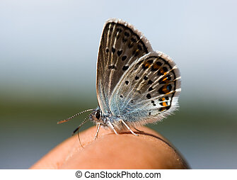 airdrome - The small butterfly on a hand of the person close...