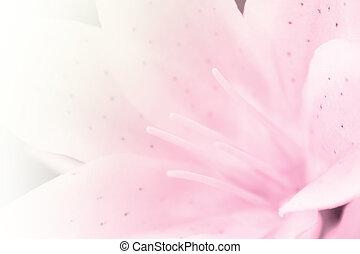flor, Lirio