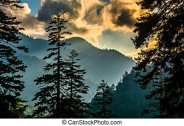 Evening view through pine trees from an overlook on Newfound...