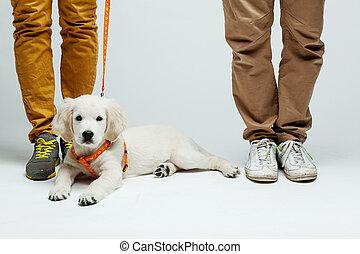 puppy golden retriever - golden retriever puppy at the feet...