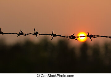 Barbed wire silhouette on sunset sky.