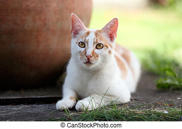 Young white and red cat