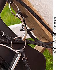 Bridle and horse dressage saddle. close up