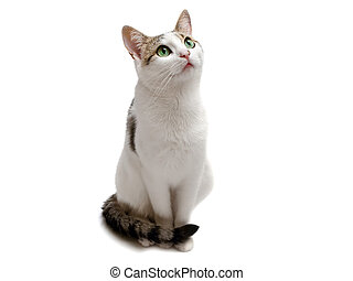 cat - Photo of the seatting cat against the white background