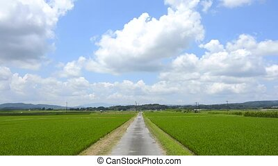 Road and rice field - Narrow road passes through the rice...