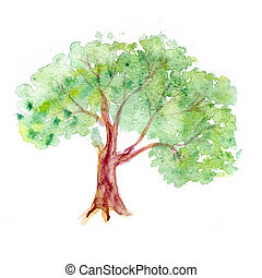 tree on a white background. watercolor - tree on a white...