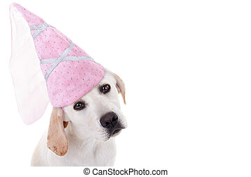 Dog Princess - Labrador Halloween princess puppy dog in...
