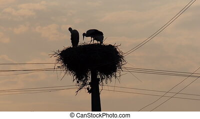 stork silhouette - Silhouette of a stork sitting in the...