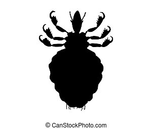 The black silhouette of a human louse