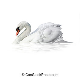 Bird swan  on a white background