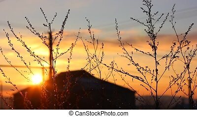 branches of the bush at sunset