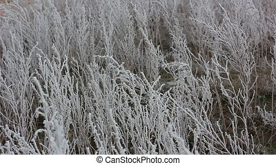 Frozen branch in winter