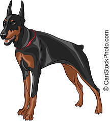 vector doberman pinscher - dog breed Doberman pinscher...