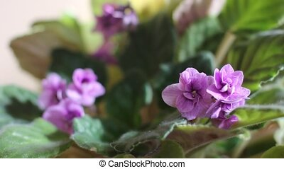 blooming violet flower