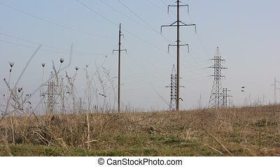 birds flying over field with electricity poles