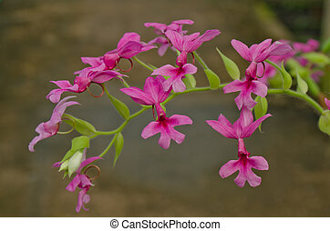 Hemophilia is a tropical orchid
