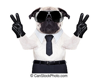 cool pug - pug dog looking so fancy with victory or peace...